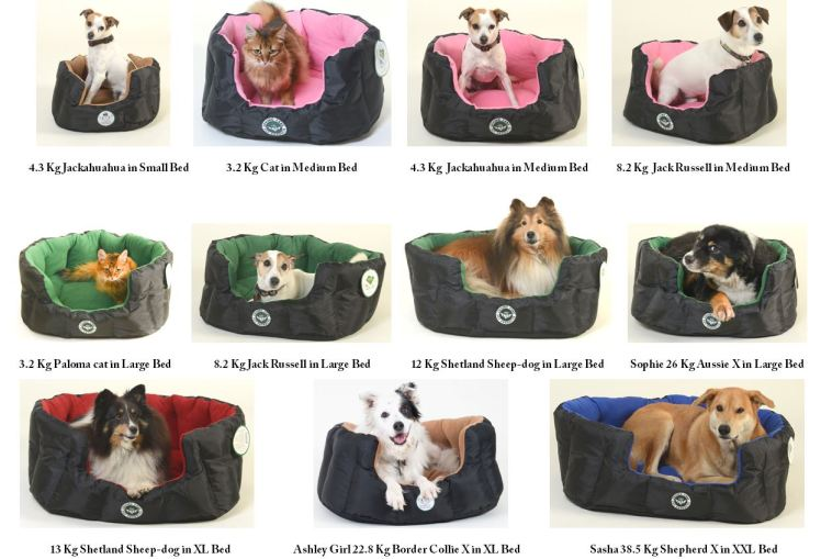 lcppeu-kgs-photo-array-of-pets-in-beds