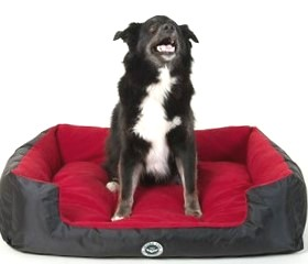 Neely Grinning on Love Red Lounger