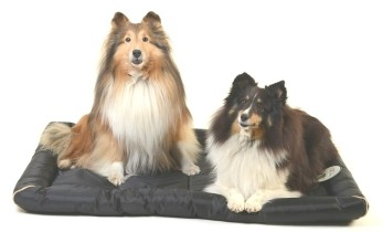 LCPP 12 Kg and 13 Kg Shetland Sheepdogs on XL Crate Mat